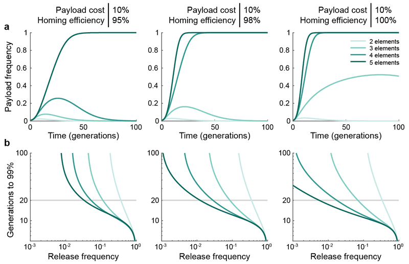 Figure 3 | The maximum frequency of the payload element (A), as well as its time to 99% frequency in a population, increases with the number of elements in the daisy chain. a, Example simulations assuming a 1% release of daisy drive organisms having a 10% payload fitness cost, and 95% (left), 98% (middle), or 100% (right) homing efficiencies. Darker shades indicate longer daisy chains (from 2 to 5 elements). b, Generations required for the payload element to attain 99% frequency.