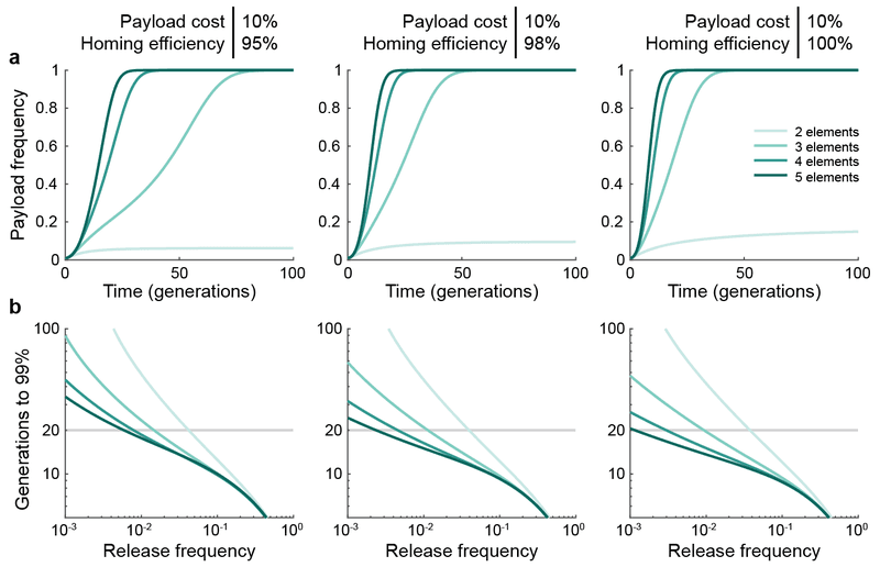 Supplementary Figure 5 | Repeated seeding of engineered organisms improves daisy drive spread for low release frequencies. a, Example simulations assuming a 1% release of daisy drive organisms having a 10% payload fitness cost, and 95% (left), 98% (middle), or 100% (right) homing efficiencies. Darker shades indicate longer daisy chains (from 2 to 5 elements). b, Generations required for the payload element to attain 99% frequency. All simulations are identical to those in Fig. 3 of the main text, except here we assume that the initial release is repeated each generation.