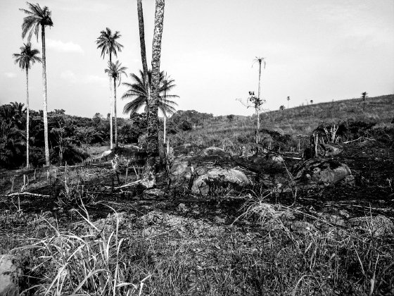 <p>Figure 5.3 The area known as the Guinea forest region, now largely deforested because of logging and clearing and burning of the land for agriculture. Photo credit: Daniel Bausch.</p>