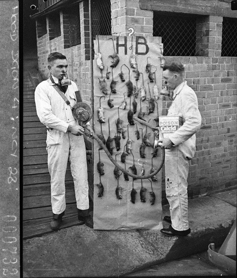Houghton & Byrne, pest exterminators (9/7/1937)