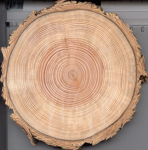 <p>Figure 3.3</p><p>Zuni Douglas fir, © Henri D. Grissino-Mayer, The University of Tennessee–Knoxville. Tree rings can be the inspiration for visualizing history. They show seasonal changes, so are appropriate for situations where there are variations in a repeating temporal cycle. They are directional, showing greater growth in one area or scars in another. What significance might you apply to different compass points of the ring?</p>