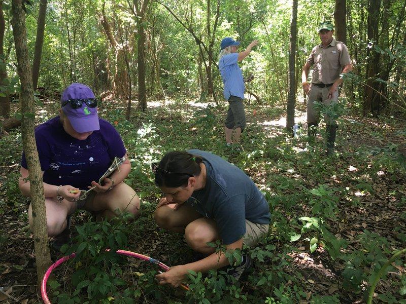 <p>Teachers collecting data on invasive species density in City Park using hula hoops as quadrats. Louisiana Coastal Master Teacher Fellowship, 2019. Photo by Ripple Effect.</p>