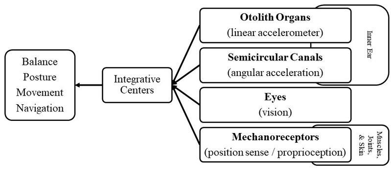 <p>Figure 4. Block diagram of human sensorimotor function (Modified from Buckey, 2006)</p>