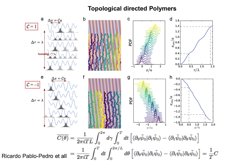 "R Pablo Pedro, J Paulose, et all.  ""Topological patterning of interacting polymers"". Sumbitted 13 Mar, 2018. <https://arxiv.org/abs/1803.04951>"