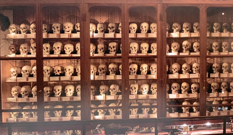 <p>Figure 1. The Hyrtl Skull Collection. Reproduced with permission from The Mütter Museum of the College of Physicians of Philadelphia.</p>