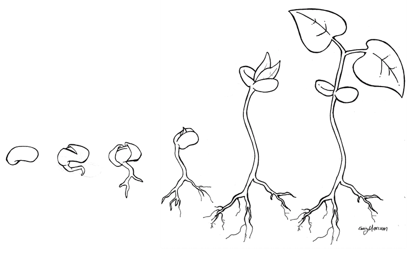 <p><em>Figure 4 - An illustration of the bean lifecycle (drawing from nature).</em></p>