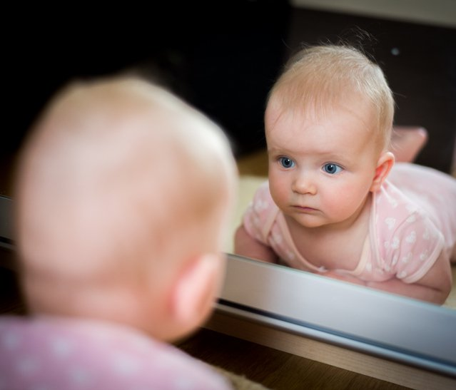 <p>Early mirror neurons research</p>