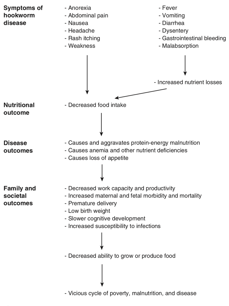 <p>Figure 6.3</p><p>Effects and consequences of hookworm disease in human populations. Source: Crompton and Stephenson 1990, p. 235, reprinted with permission)</p>