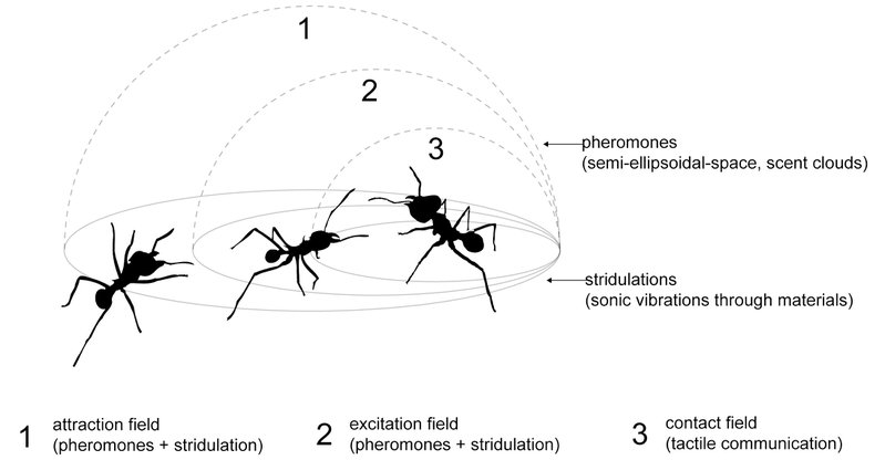 Figure 3 - Graphic representation of the multicomponent communication in ants, imagined as invisible atmospheric fields created by the combination of pheromones and stridulations. Graphic designed by Kuai Shen. © Kuai Shen, 2011. Used with permission.