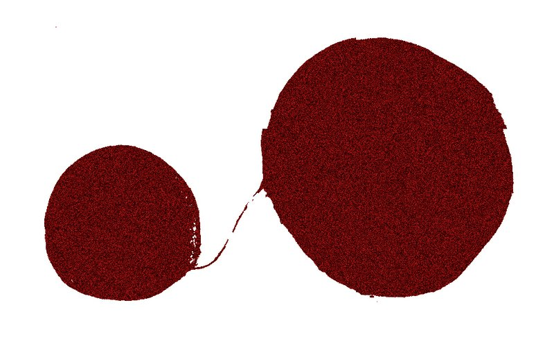 Two separated spheres of brain cells in a dish forming a connection.