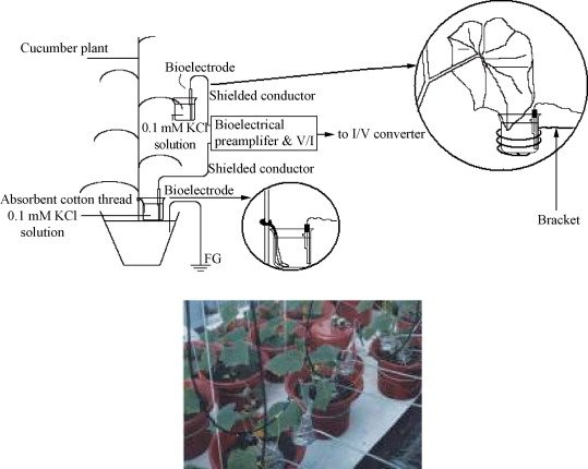 "<p class="""">Electrophysiology and Plant Perception </p>"
